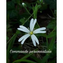 Commande réservée fleurs en satin de soie ivoire